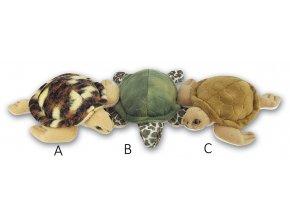 K111 Turtles