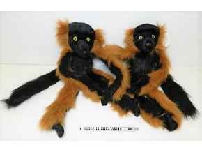 297A97D2 AFC0 45ED 8A45 90211EDE5767 lemur cerveny m93058