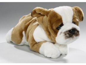 Plyšový pes bulldog 30 cm - plyšové hračky