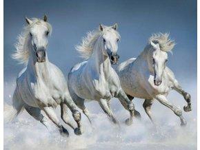 Magnetka 3D koně 7 x 9 cm