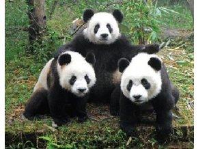 9A3D4C0C 22FF 4C40 AD15 9494E09BBD80 3d magnet panda c1037522
