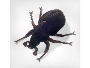 Plyšový brouk hnědý 18 cm - plyšové hračky