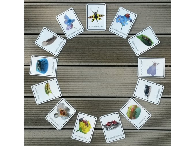 Malá Áňa hmyzáčci - samostatné karty