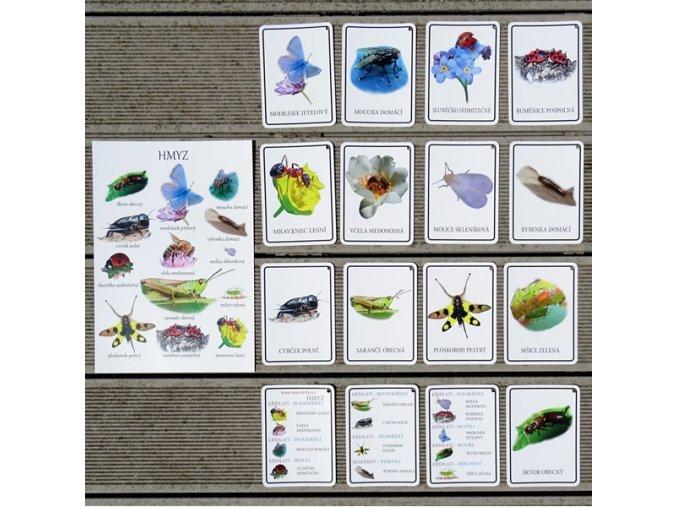 Malá Áňa Poznávací sada hmyzáčci karty +A4