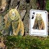 poznavaci karty zviratka medved