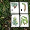 Malá Áňa karty Poznávací sada Naše stromy karty + A4