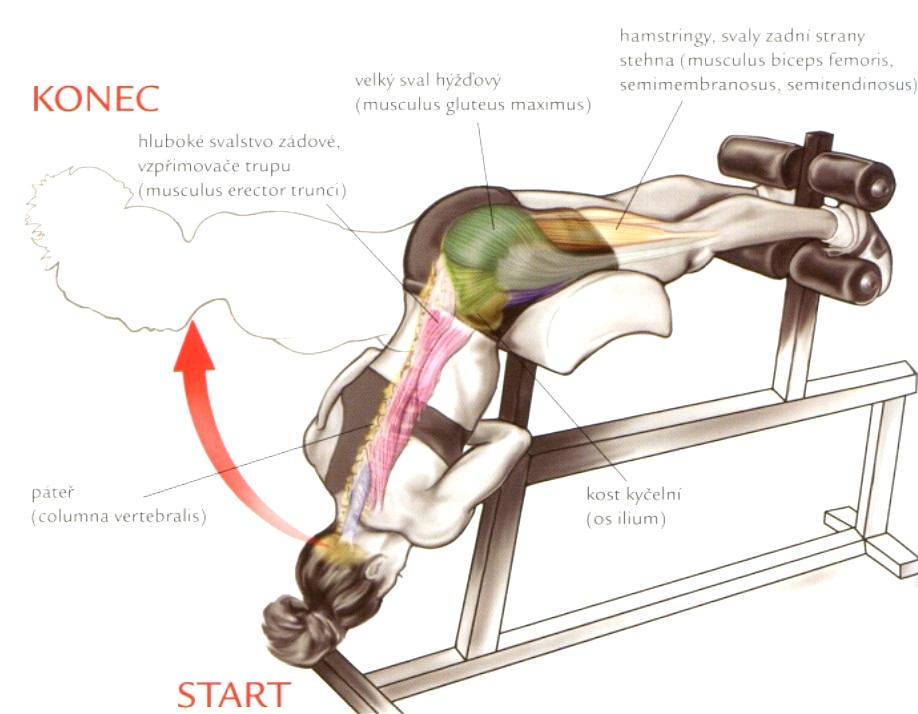 Cviky na hamstringy (zadnú časť stehien)
