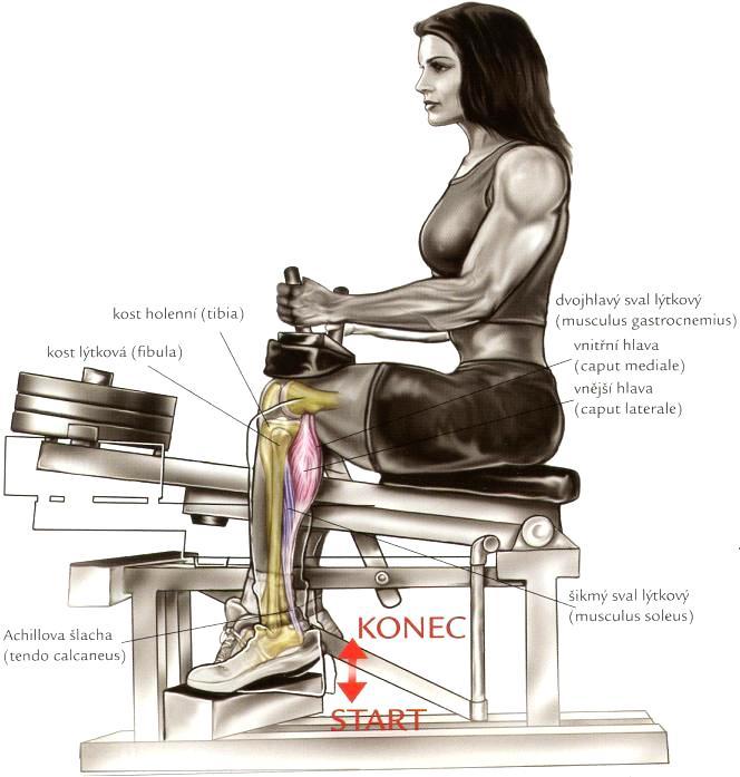 Cviky na lýtka (trojhlavý sval lýtka)