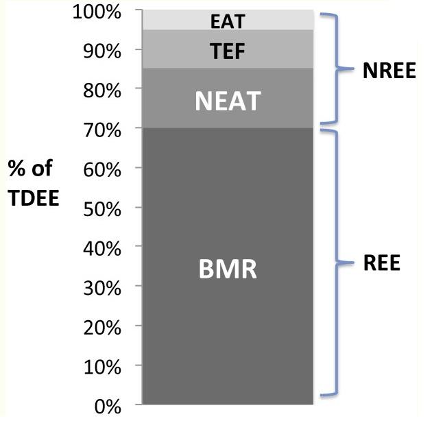 bazalny metabolizmus