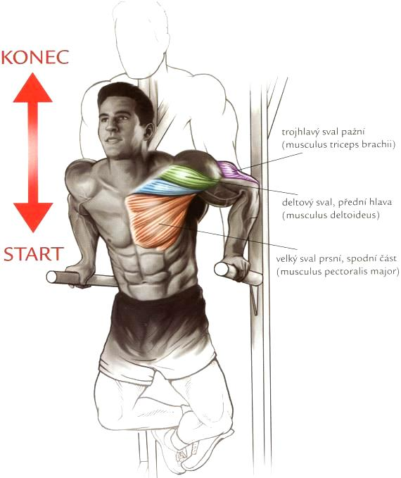 prsny sval 1