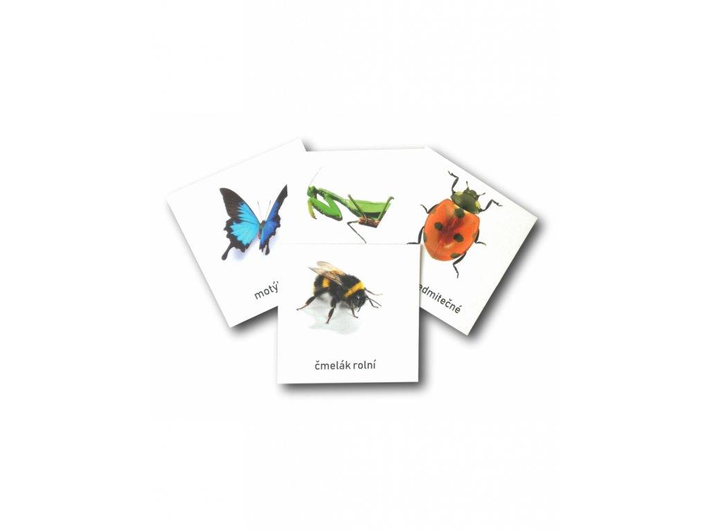 TŘÍSLOŽKOVÉ KARTY - HMYZ