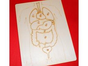 drevena-vkladacka-lidske-telo