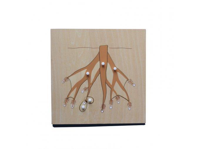 puzzle tri koreny (1)