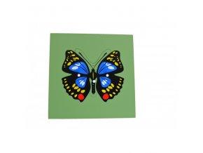 puzzle motyl (1)