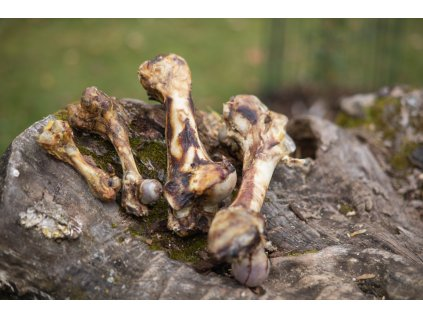 Sušené kosti