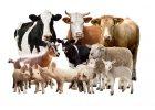 Chovateľské potreby pre hospodárske zvieratá