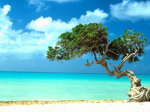 Tropický vánok
