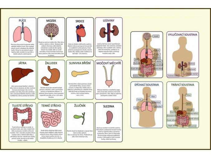 orgány info karty