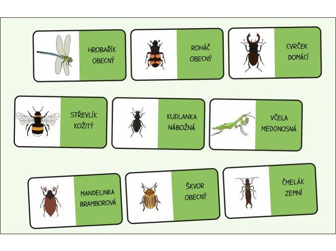 domino hmyz