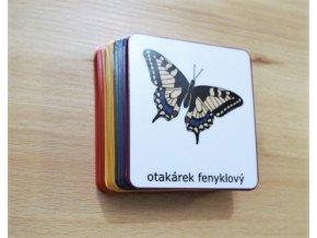 dělení živočichů