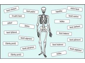 kostra popisky kostí
