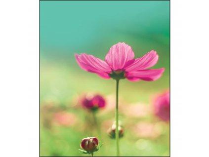 Unuo tlač, Kočárkovina 280 g, Panel 50 x 60 cm, Ružový kvet