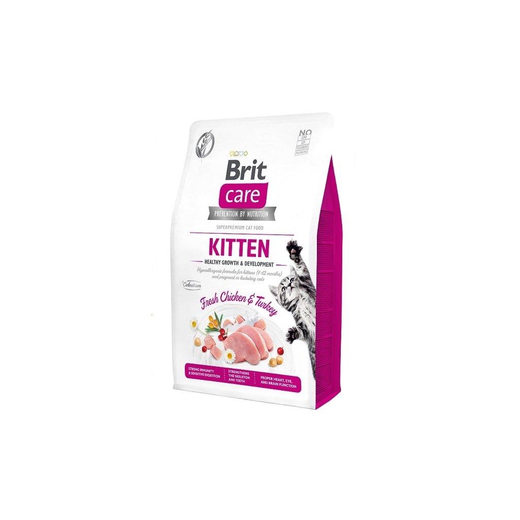 brit cat kitten 2021