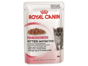 kitten instinctive in jelly