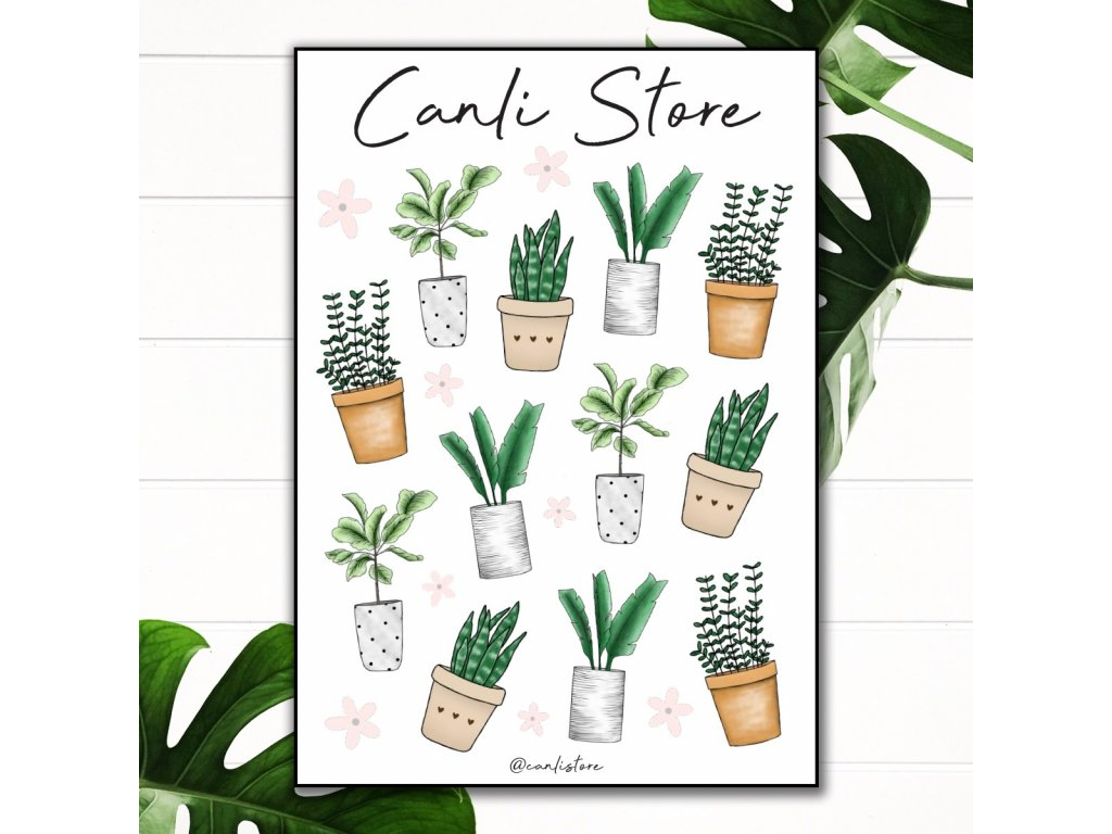 cover plant 2