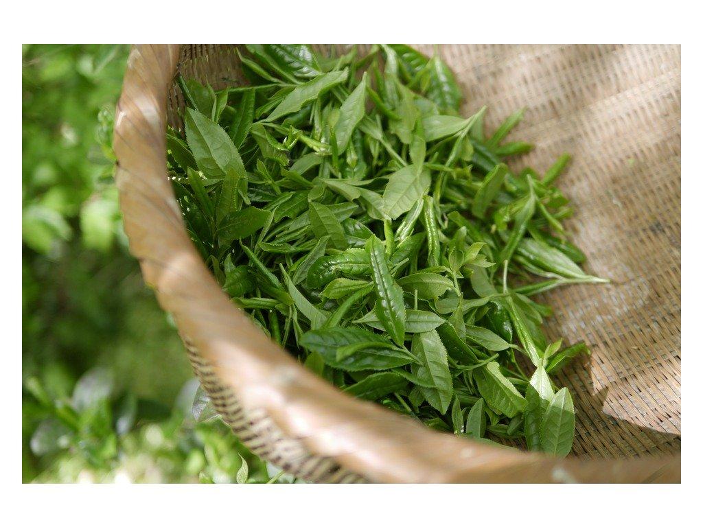 vôňa zelený čaj