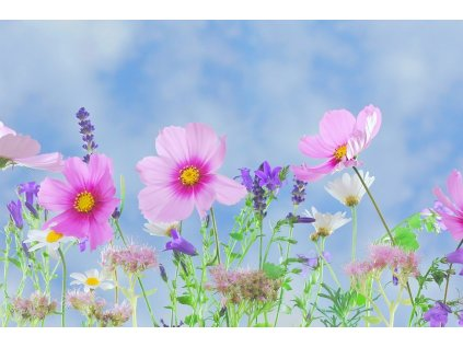 rozkvitnutá záhrada vôňa do mydla a kozmetiky