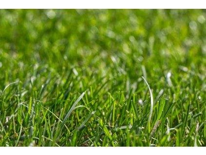 vôňa pokosená tráva