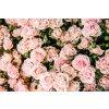 Vôňa do mydla a kozmetiky Marocká ruža