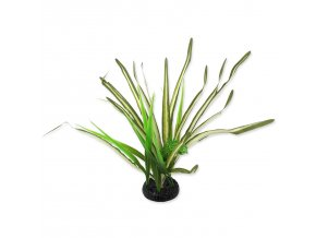 Rostlina REPTI PLANET travina Spartina 30 cm-1ks