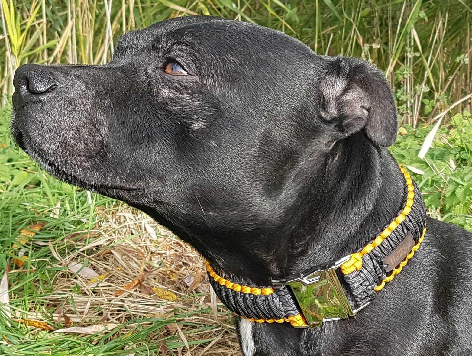 Jak změřit psa pro zapínací obojek z paracordu