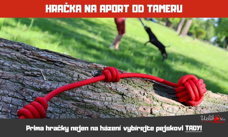 Házecí hračka nejen na aport!