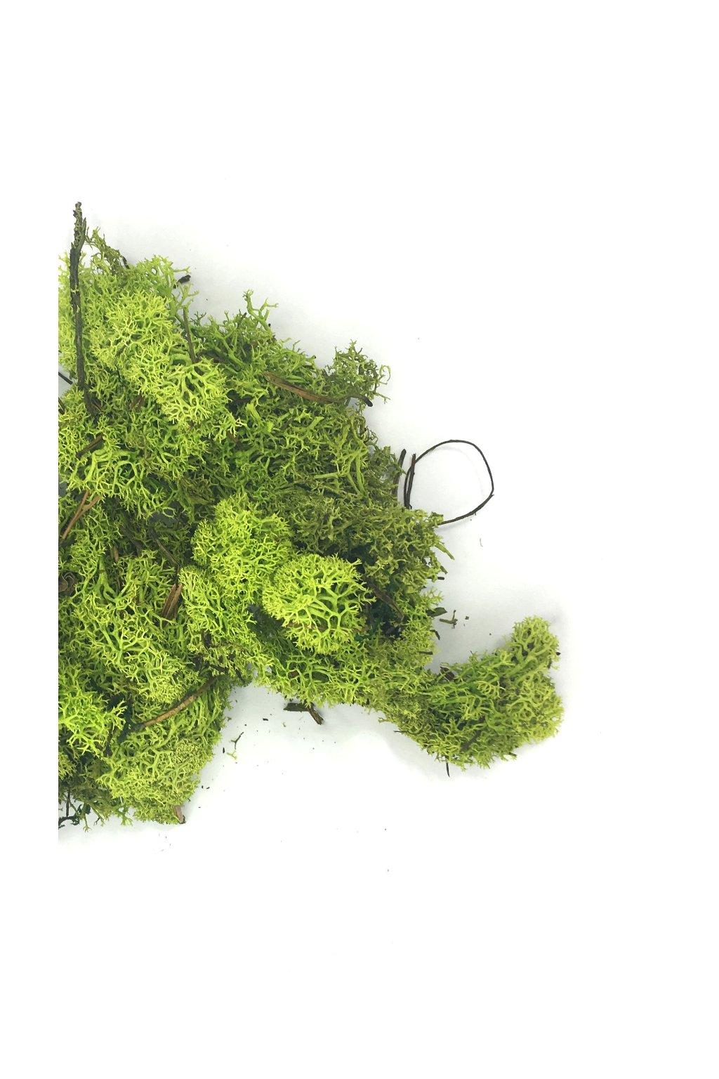 Lišejník barvený zelený