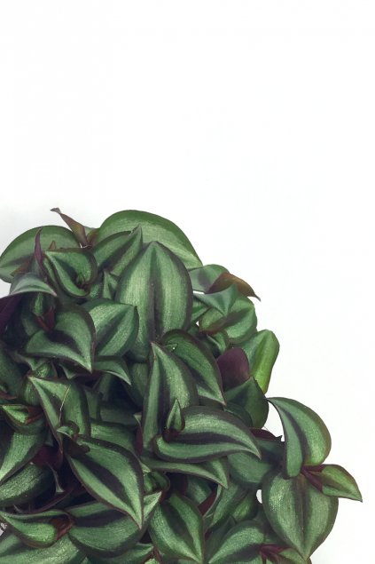 Minipokojovka
