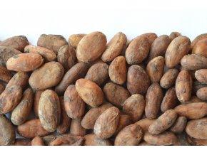 Přírodní kakaové boby nepražené 50g