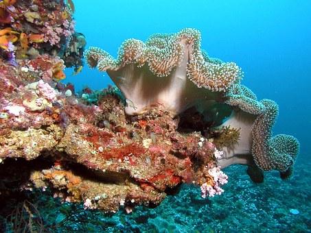 maledivy-koral