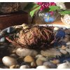 Everything Soulful Rose of Jericho 1024x1024