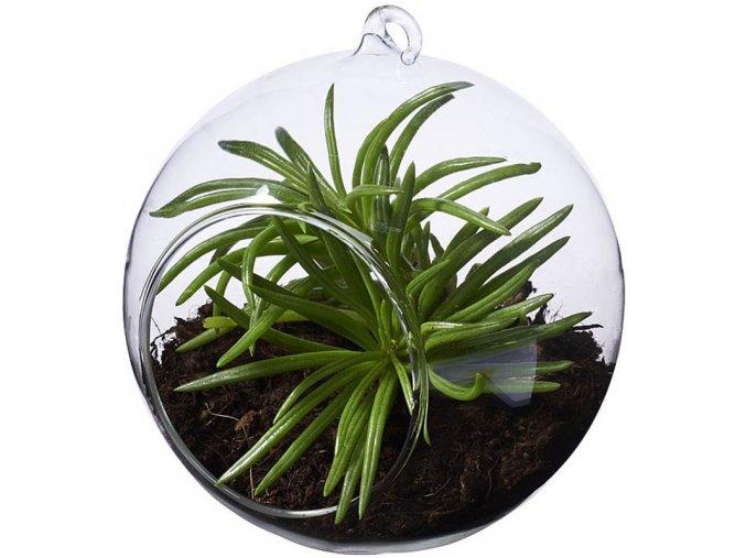 koule skleněná banka pro sukulenty kaktusy závěsná dekorace na rostliny květiny levne brno skladem eshop vašenebe vaše nebe aerarium terarium akvarium vivarium