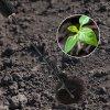 do zeme do pisku kvetiny sazeni stromu vyvrtani diry do hliny staveni plotu pudni vrtak 71YXs65gANL. AC SL1001