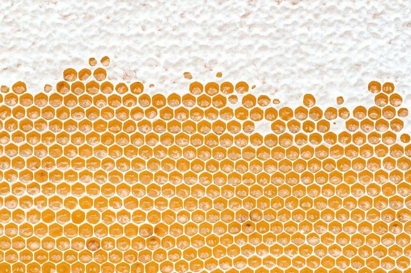 Med přímo od včelaře: blíží se medobraní