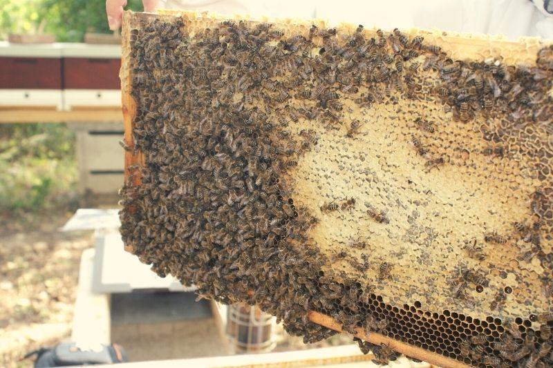 Zajímavosti o včelách. Matky, trubci a žihadla
