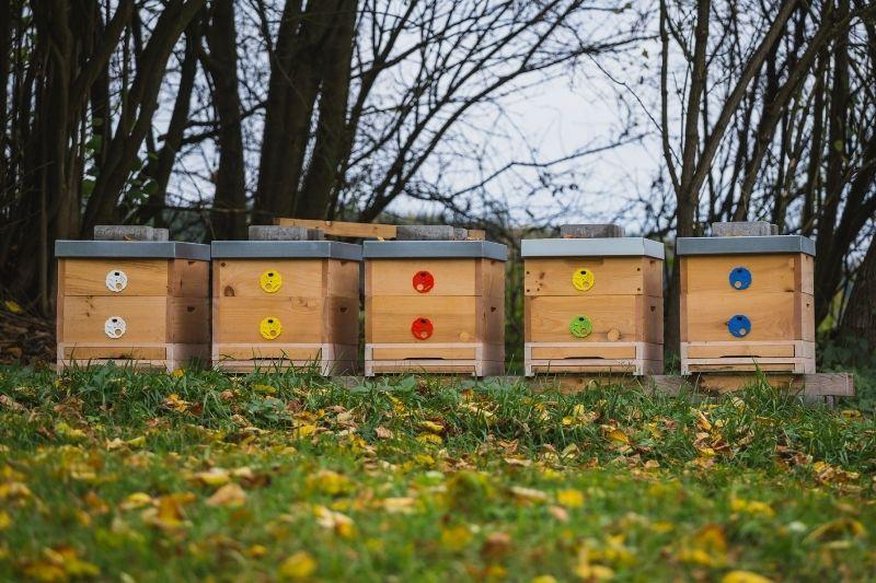 Co dělají včely na podzim
