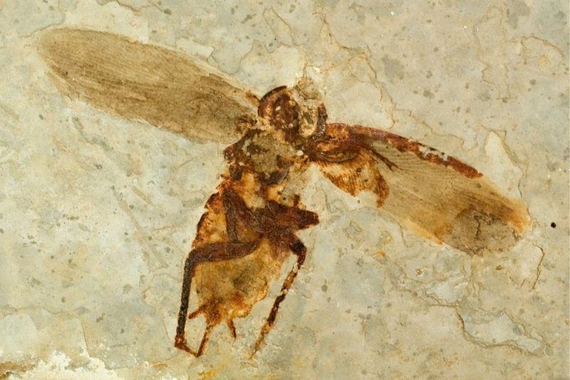 Zajímavosti o včelách 4. Váhy, míry a vznik