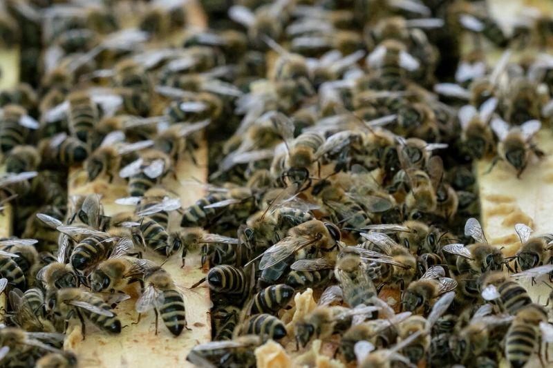Včela, včely, včeličky