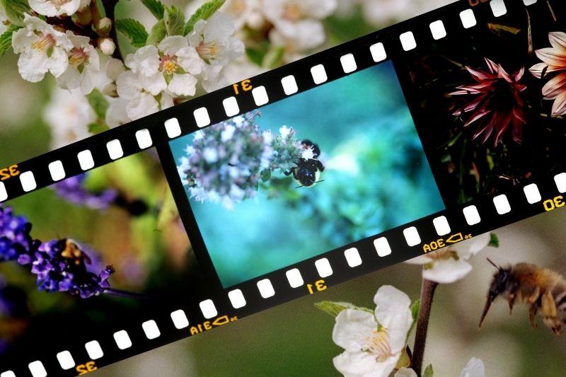 Včely, med a film