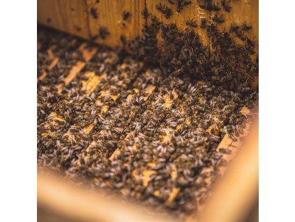 Vyzimované včelstvo 10 rámků